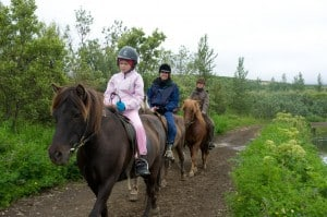 Easy Trail ride on the Icelandic Purebred