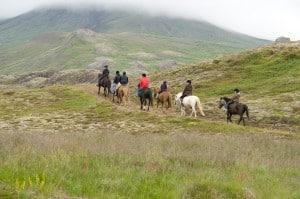 Horseback Riding cruise day tours, Icelandic Horses