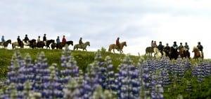 Icelandic Horseback Riding for cruise ships