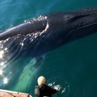Cruise whale watching in Akureyri